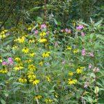 kanutouren auf der wupper flora